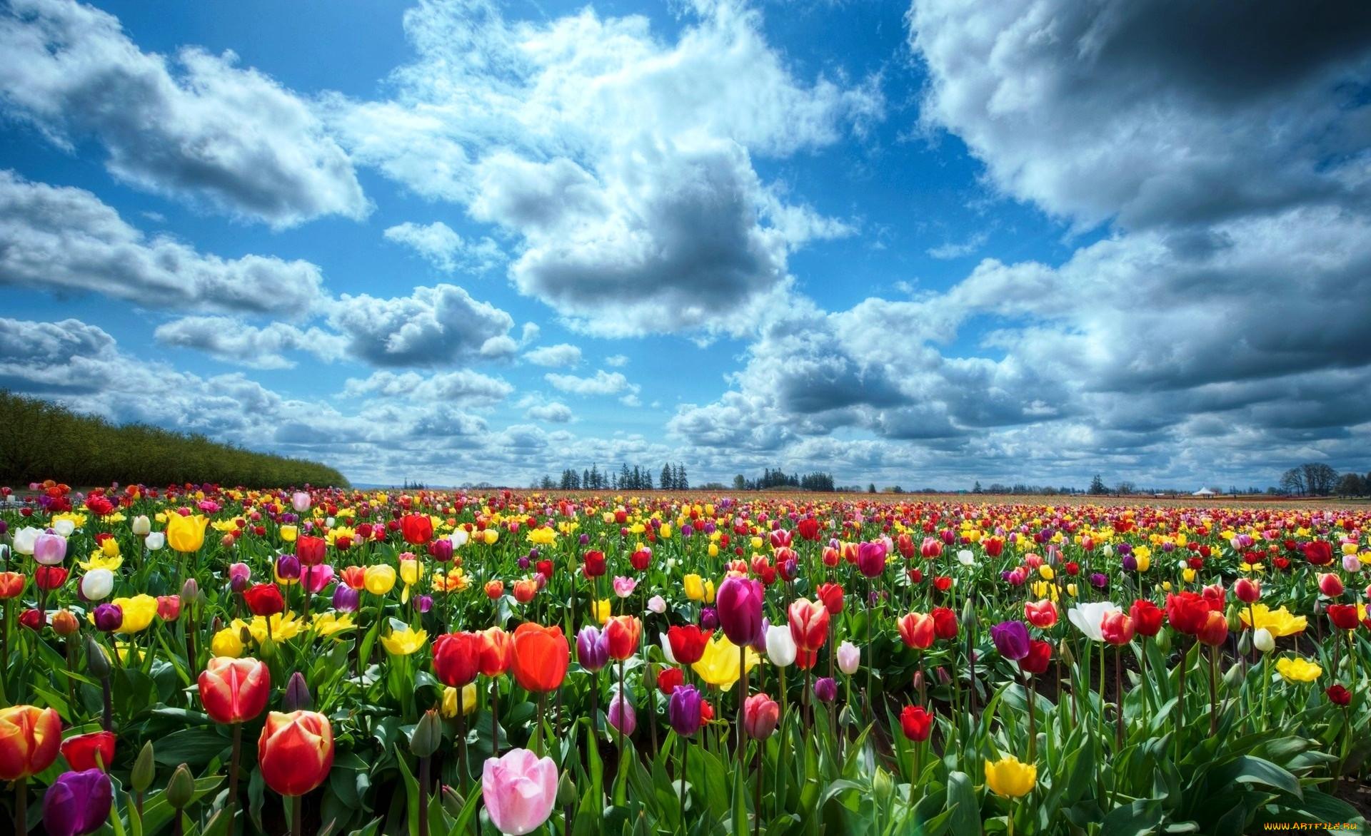 Открытка панорама цветы